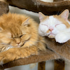 仲良しな猫の親子の画像