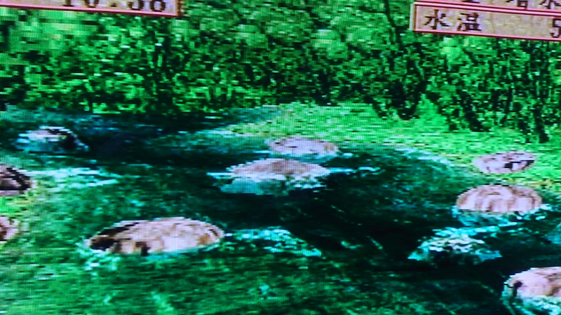 鈴木篠千のゲームと釣りと…。利賀川2 #釣道 渓流・湖編(70)
