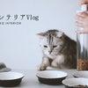 お猫さまの食器を新調しましたの画像