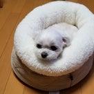 ニトリの犬をダメにするベッドの記事より