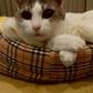 20年の老猫 の画像