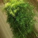 うちの観葉植物が‥の記事より