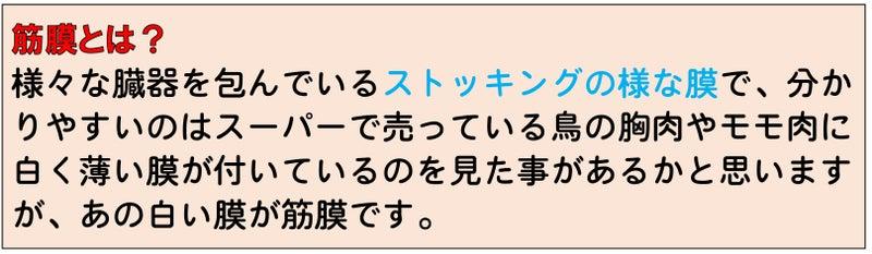 katakori-youtuu-mikawa-sakata-seitai-8