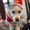 【引退犬の紹介】ジャック&ダックスの里親さま募集中!の画像