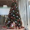 大森レッスンからお知らせと都内クリスマスツリーの画像