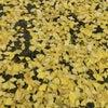 yellow 船木結の画像