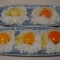 画像 卵の美味しさと面白さのこだわりは、国産・環境・自家製の餌! の記事より 8つ目