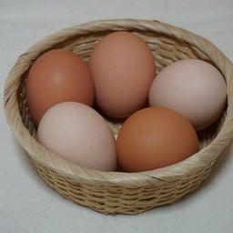 画像 卵の美味しさと面白さのこだわりは、国産・環境・自家製の餌! の記事より 1つ目