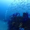 沈没船レックダイビング!和歌山県田辺市の画像
