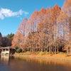 美しい冬木立の画像