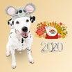明けましておめでとうございマーチン♪ A Happy New Year!! 2020