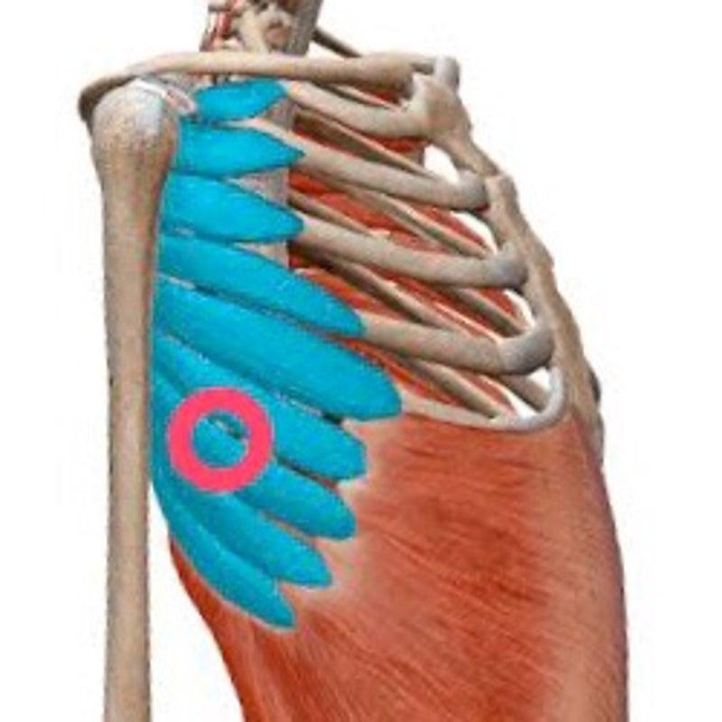 が 痛い 脇 胸の横の痛みと脇の下の痛み