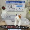 県内初‼スマホで猫ちゃんの健康管理☆の画像