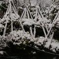 雪国里山田舎ウサ