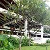 《冬休みハワイ》史上最高のトランプ・スイートルーム⭐️