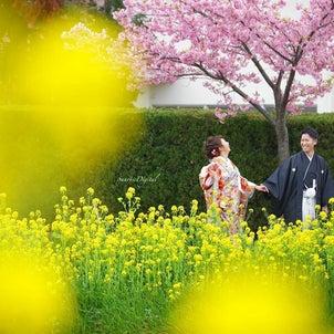 サンライズデジタル名古屋ロケーションフォト桜と菜の花和装前撮りの画像