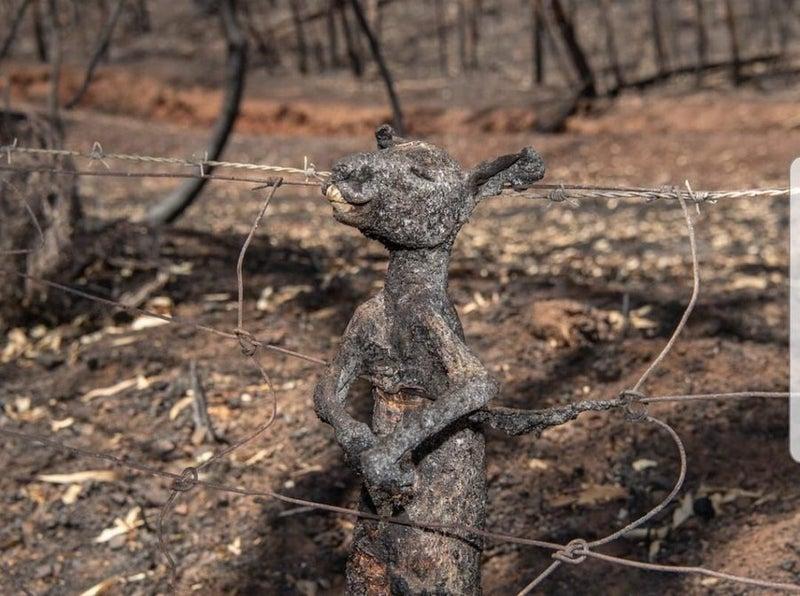 火事 山 オーストラリア の オーストラリアで山火事が起こる原因は?ユーカリの自然発火が理由?