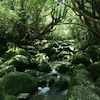 夢の屋久島の画像