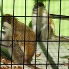 続1月5日の東山、ゾウさくら、激怒(笑)ライオン夫妻、類人猿の記事より