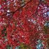 紅葉を訪ねて:松井の画像