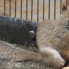 気になる東山動物園アジアゾーンの工事始まる、りす、きりん、フラミンゴの記事より
