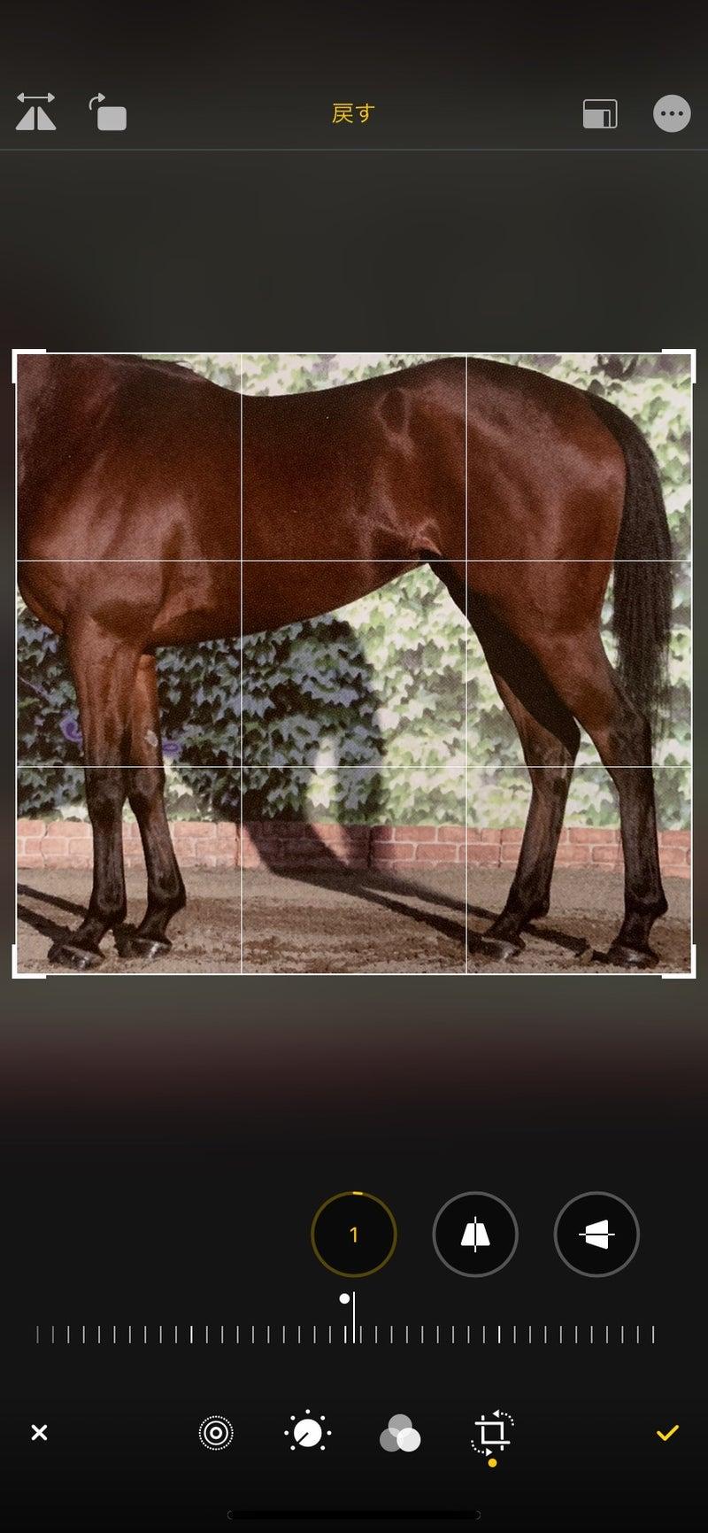 馬 や ー 体 診断 しゅん