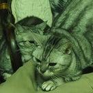 猫とバラ、ドクターXのベン・ケーシーの記事より