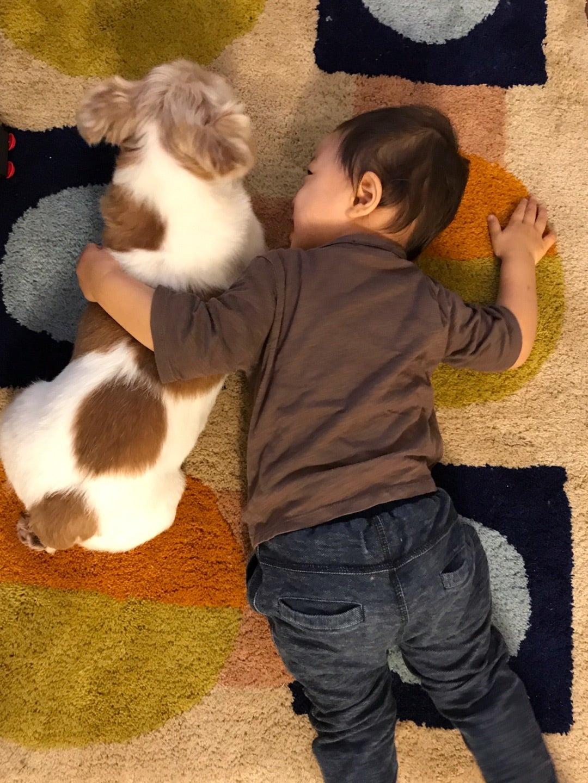 犬と息子の仲良し日記