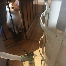 画像 猫とストーブ&2月9日(日)1on1コーチング体験会 開催します の記事より 2つ目