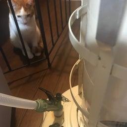 画像 猫とストーブ&2月9日(日)1on1コーチング体験会 開催します の記事より 1つ目