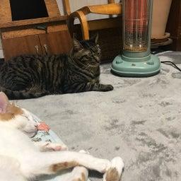 画像 後から来たのにえらそうな猫と空気清浄機 の記事より 2つ目