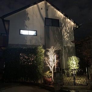 木と建物を照らすの画像
