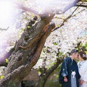 桜サンライズデジタル名古屋ロケーションフォト和装前撮りの画像