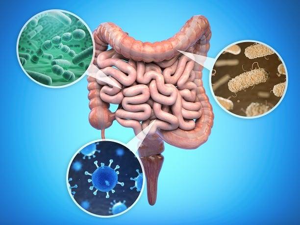 デトックス 腸内細菌
