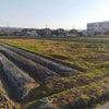 巨大迷路を田んぼで作ろう❗️遊ぼう❗️の画像