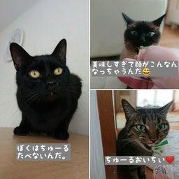 画像 みんな保護猫ちゃん♡ の記事より 2つ目