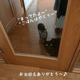 画像 みんな保護猫ちゃん♡ の記事より 3つ目