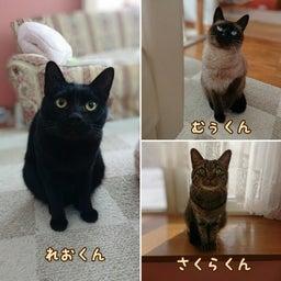 画像 みんな保護猫ちゃん♡ の記事より 1つ目