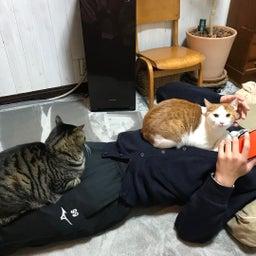 画像 あくまで猫好きではない の記事より 4つ目