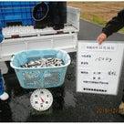 「キープバンド募金」五三川水系にフナを放流しました。の記事より