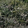 さぬき 高松 栗林公園の梅の画像