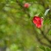 香川 さぬき 栗林公園 Ritsurin Garden もろもろの画像
