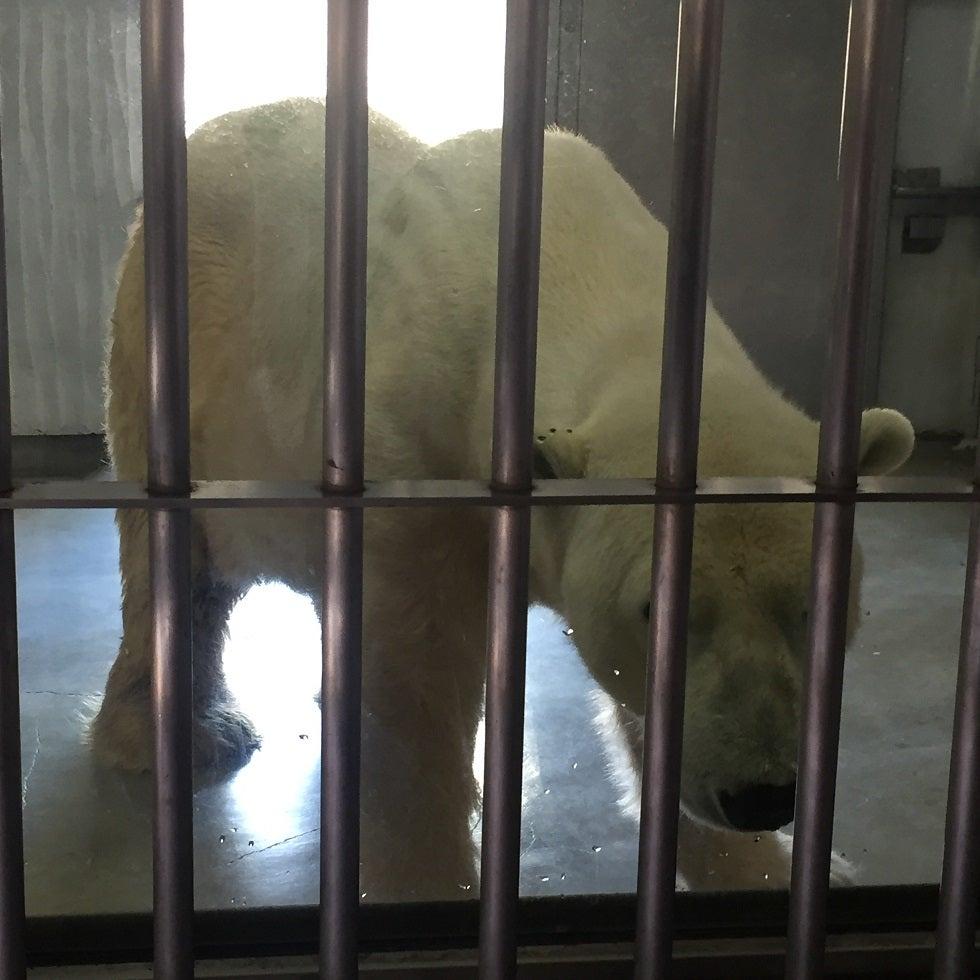 東山動物園のインパクトある動物達♪