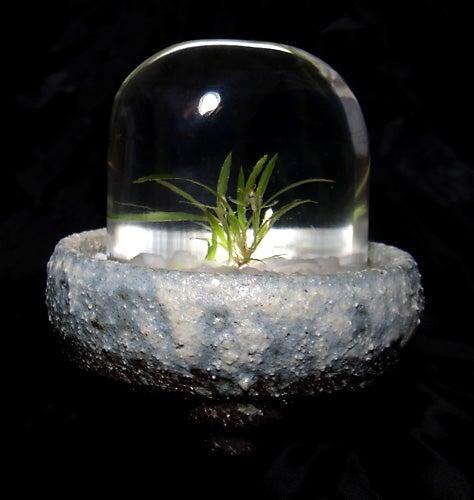 bonsai,resin-flower