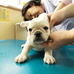 画像 11月12日生まれの赤ちゃん 1回目のワクチン接種でーす の記事より 2つ目