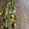 春の小花と球根のアレンジの画像