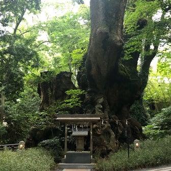 1/31(金)来宮神社オフ会を開催します。樹齢2千年の楠の優しい波動を感じましょう。現在3名