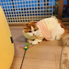 愛猫2歳のお誕生日の画像