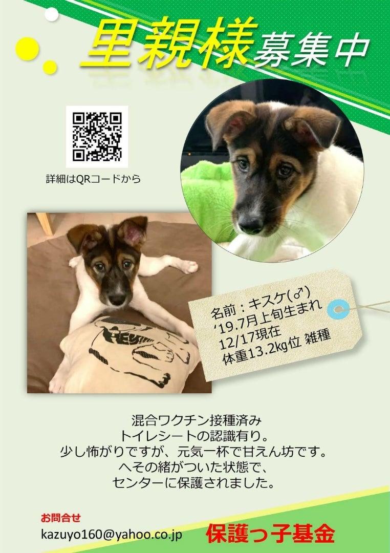 保護 犬 譲渡 会 埼玉 埼玉県の譲渡会情報 ぽちとたま