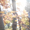 お天気の日は、ロケハンへ♪の画像